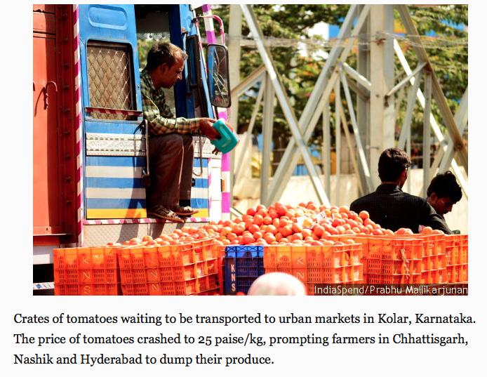 Tomato prices crashed