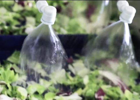 Washing - Spraying Water